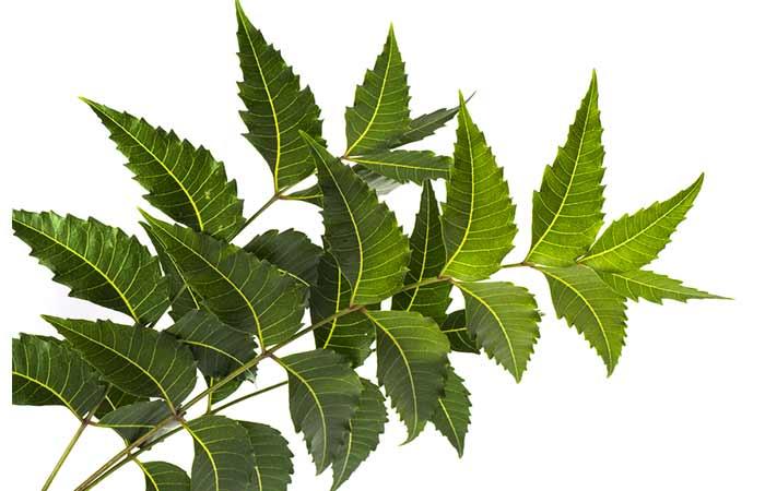 4. Neem Leaves